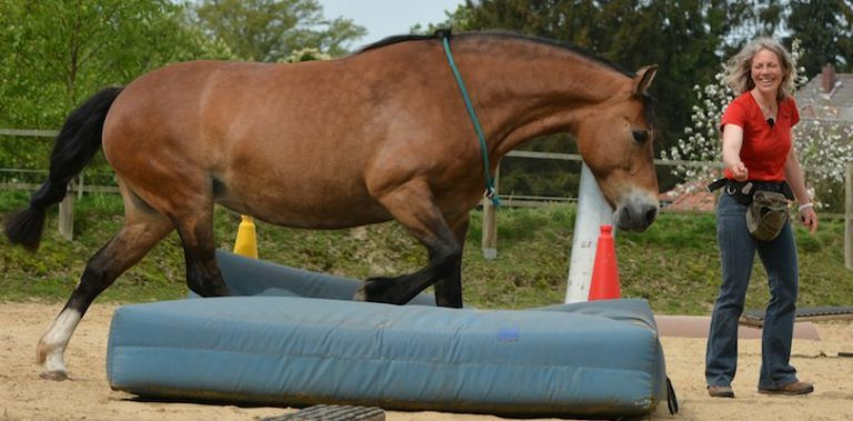 Nina Steigerwald - Freiarbeit Pferd mit Clicker