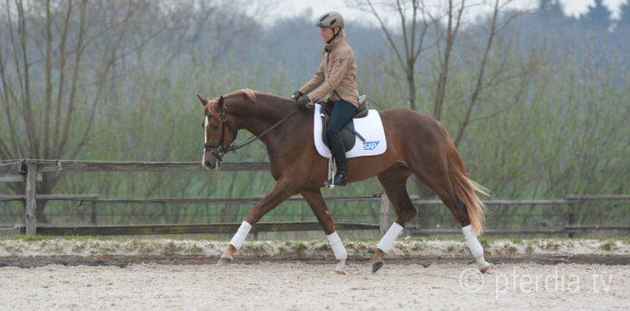 Ingrid Klimke - Pferd durchs Genick reiten
