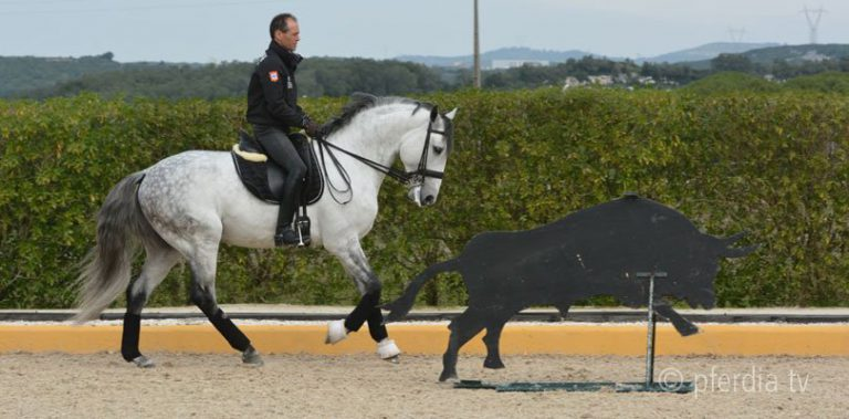 Torres Working Equitation
