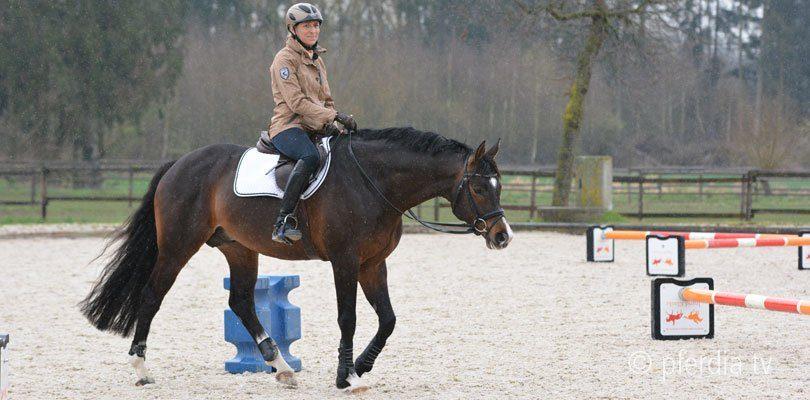Ingrid Klimke Schritt beim Pferd verbessern