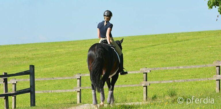 Jessica von Bredow Wendl - Muskelaufbau Pferd