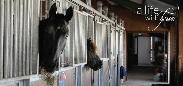 pferde-boxenruhe
