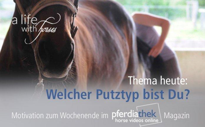 pferd-richtig-putzen