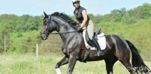 Pferde cool und trittfest machen