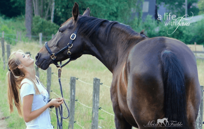 beziehung-zum-pferd