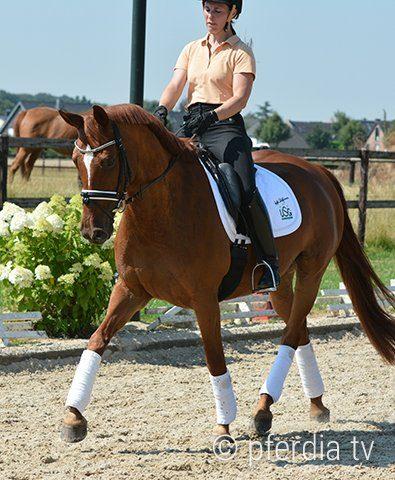 Pferd-lernt-Reiterhilfen