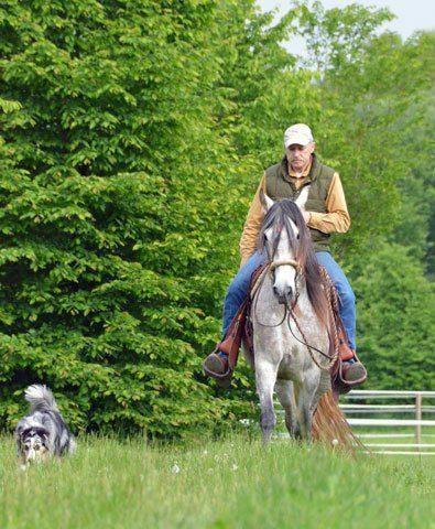 Gebrauchspferdeausbildung-kreinberg
