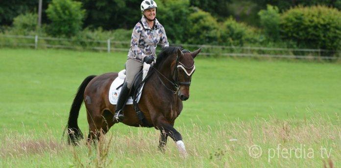 ausbildung-pferd