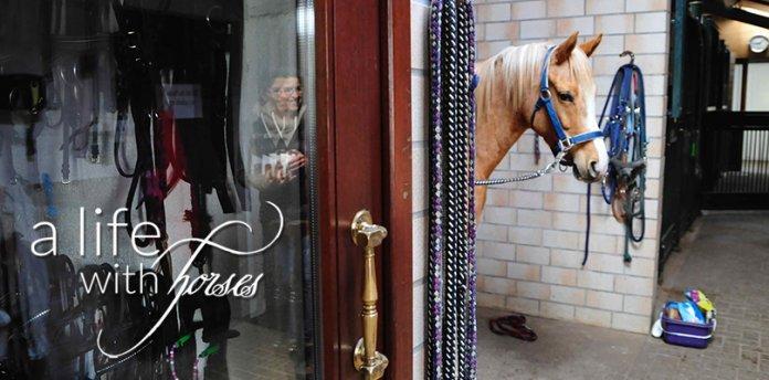 Geld-sparen-bei-Einkäufen-fürs-Pferd