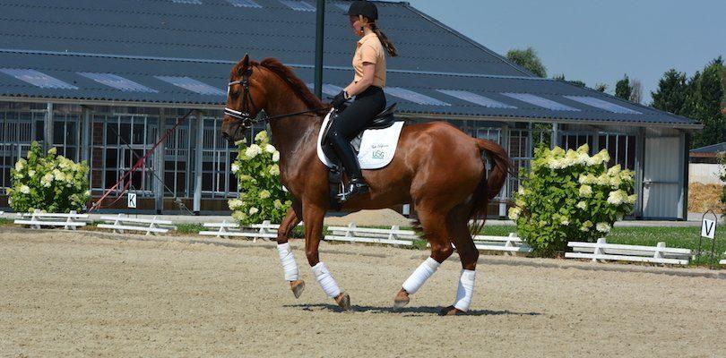 galoppieren-pferd