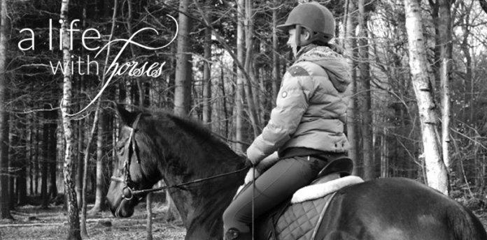 pferd-foto
