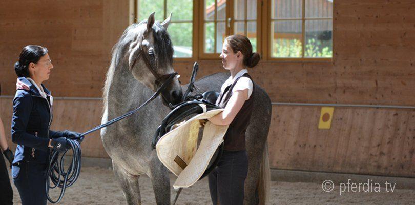Junge Pferde ausbilden