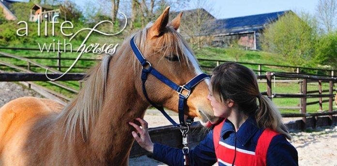 einfaches-pferd-als-raritaet