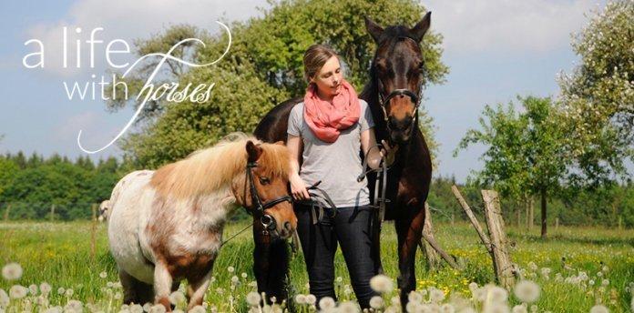 pferde-sommer