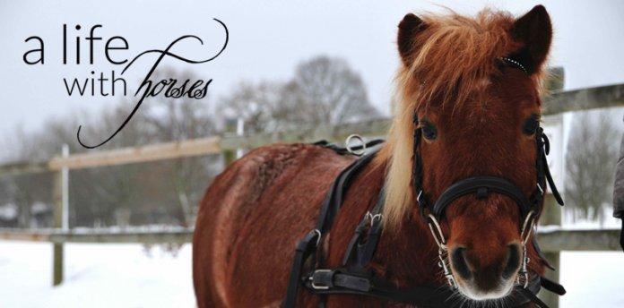 Ponys-im-Schnee