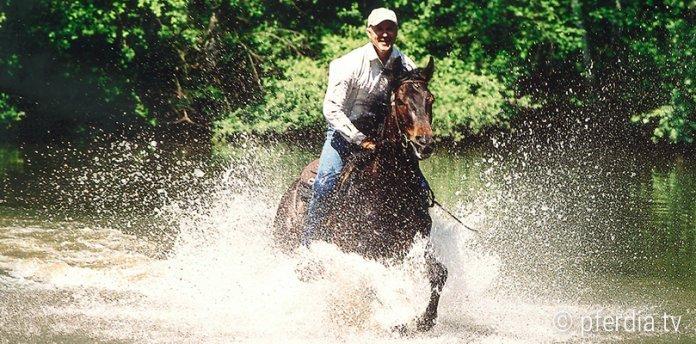 pferde-ins-wasser-reiten