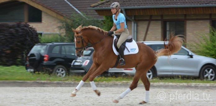 tipps-gegen-bockende-pferde