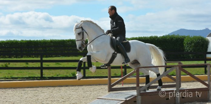 pedro-torres-working-equitation