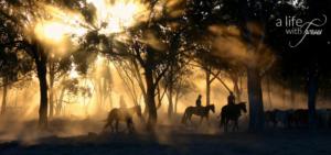 pferdemänner-und-frauen