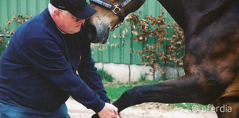 Massage beim Pferd von Claus Teslau