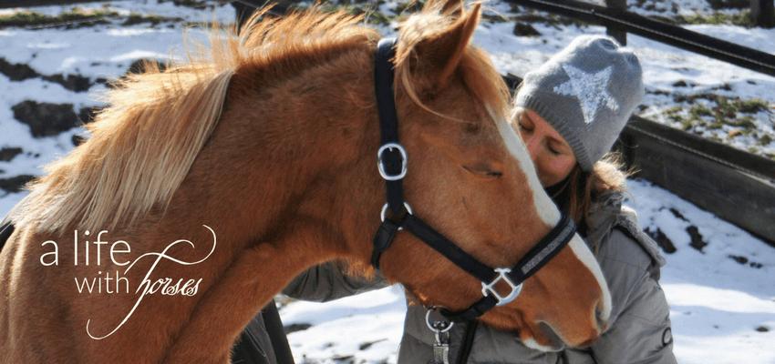 Pferd Beschäftigung bei Boxenruhe