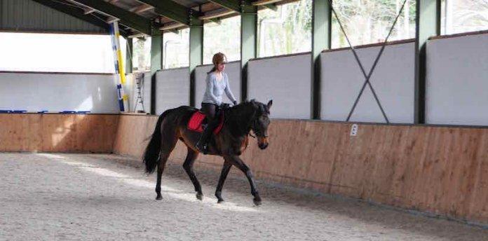 großrahmige-Pferde-reiten