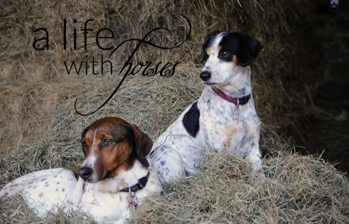 Freundschaft-unter-Hunden