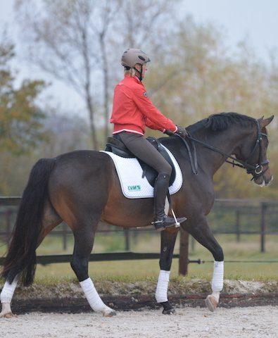 Ingrid Klimke beim Trainieren ihres Pferdes