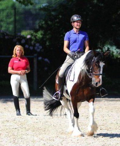 Pferde-brauchen-Beschäftigung