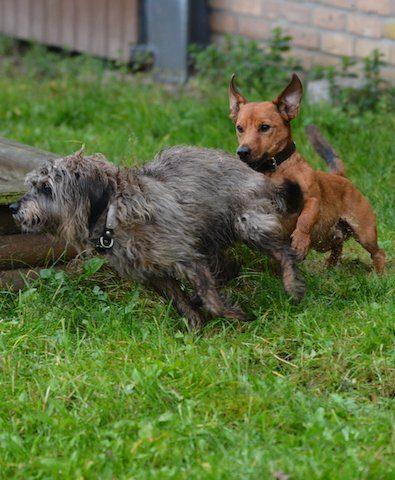 Hunde-bei-Ingrid-Klimke