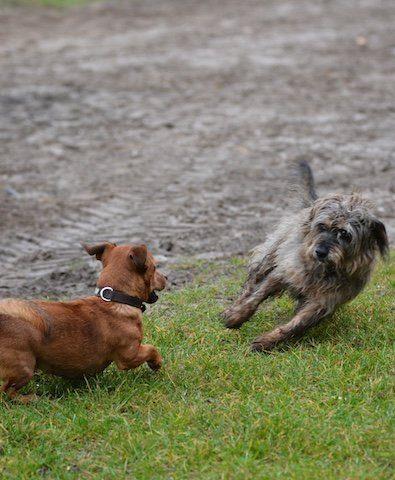 Ingrid-Klimke-Hund