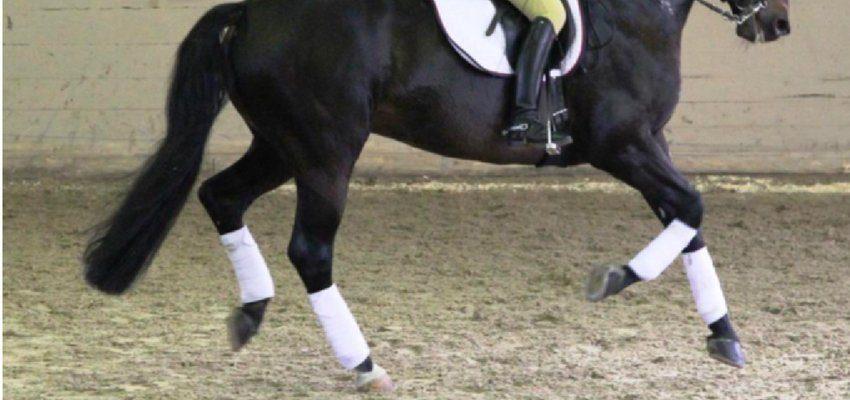 problem-modernes-pferd