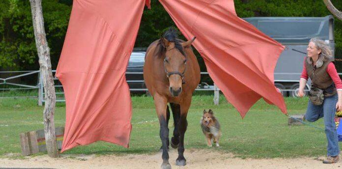Agility-für-Pferd-und-Hund