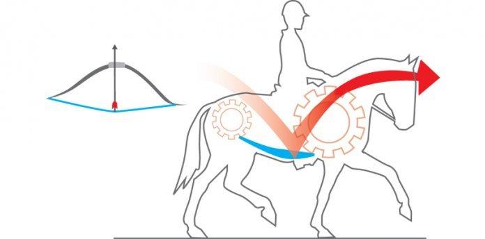 Pferde-in-positiver-Spannung