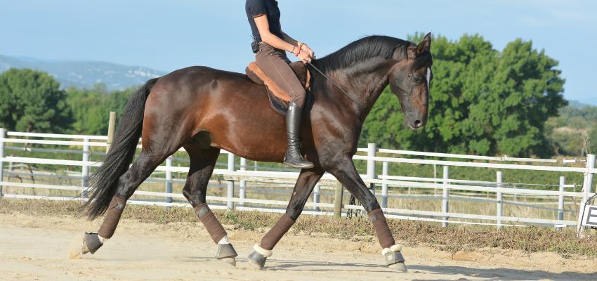 Alizee Froment reitet ihr Pferd mit Halsring