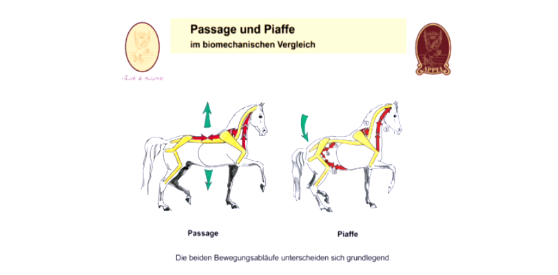Piaffe-und-Passage-vergleichen