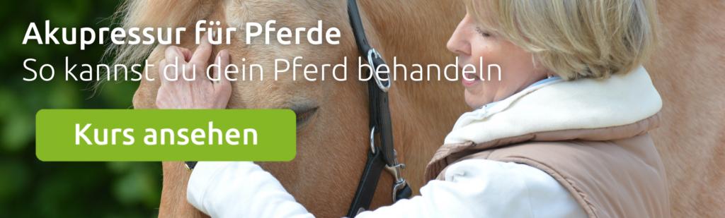 wehorse Kurs zum Thema Akupressur für das Pferd