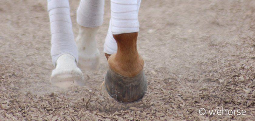 trockene Hufe beim Pferd
