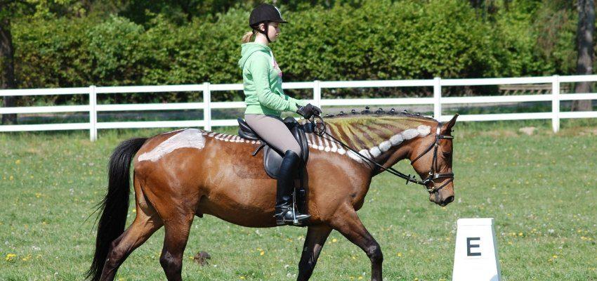 pferderücken wehorsewednesday