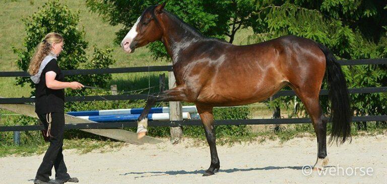 freiarbeit-liberty-horsemanship
