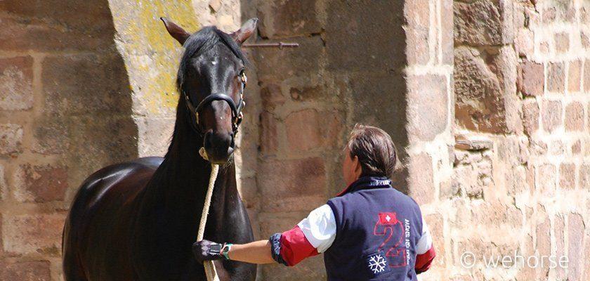 Vorbereitung Stefan Schneider Pferd anbinden