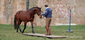 stefan, schneider, bodenarbeit, brücke, pferd