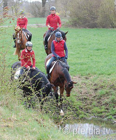 pferde-an-wasser-gewoehnen