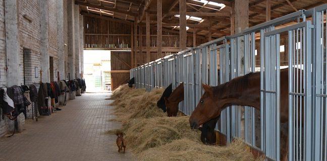 Pferdestall-Gruppenhaltung