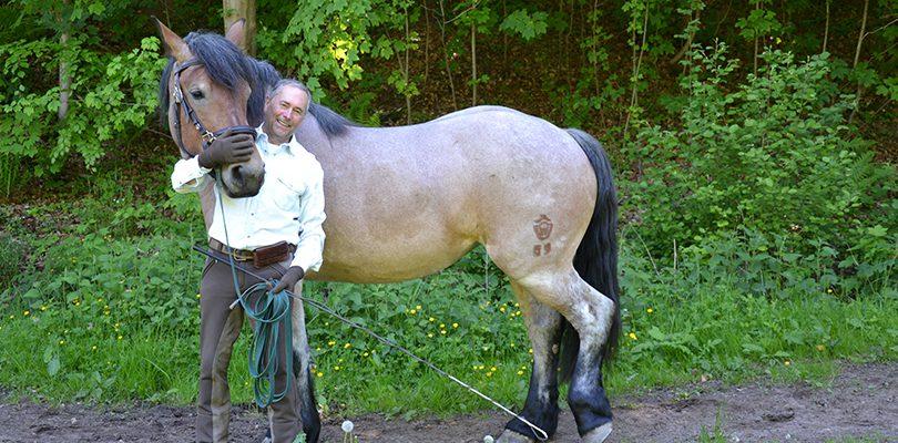 Wieso es wichtig ist, dass das Pferd rückwärts laufen kann