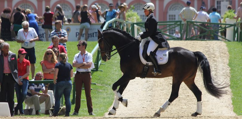 Grand-Prix-Pferd
