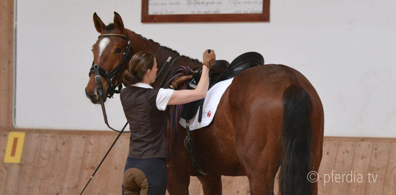 junge-pferde-anreiten