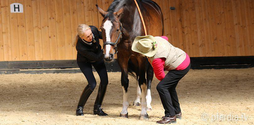 ttouches-pferd