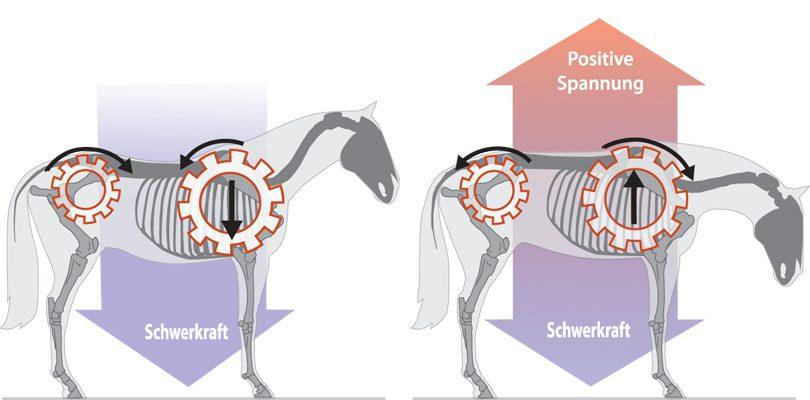 Pferde-Wirkung-Körperspannung