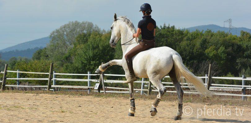 Alizée-Froment-trainiert-Sultan